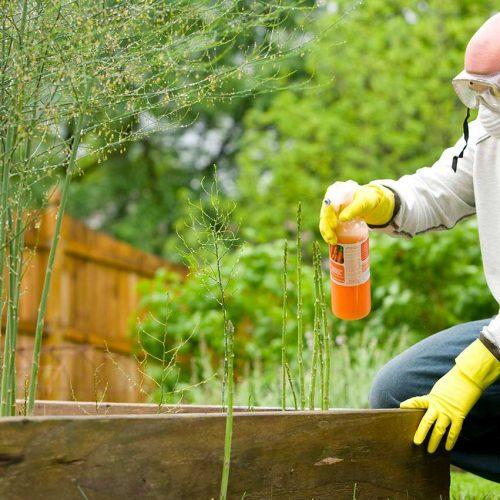 manutenzione-giardino-reggio-emilia